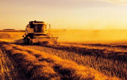 ZDA rekordno letino pšenice v Rusiji dojemajo kot grožnjo