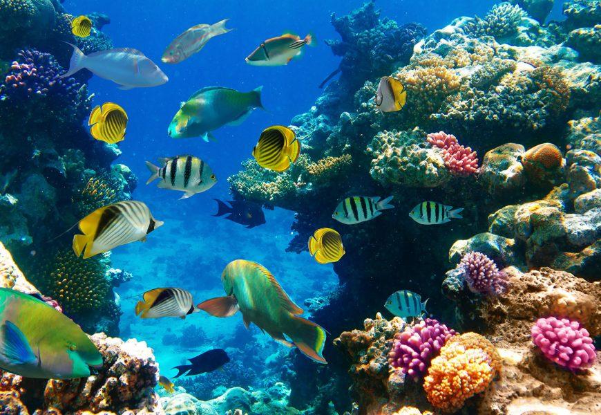 Evropska unija bo namenila 300 milijonov evrov za varovanje oceanov