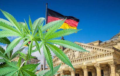 Zdravstvo – Nemčija: Po novem bo 79 lastnih pridelovalcev konoplje