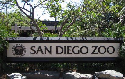 Najlepši izlet v življenju: San Diego Zoo – živalski vrt