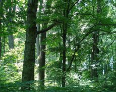 Evropska komisija je predstavila sveženj ukrepov za zaščito in obnovo svetovnih gozdov