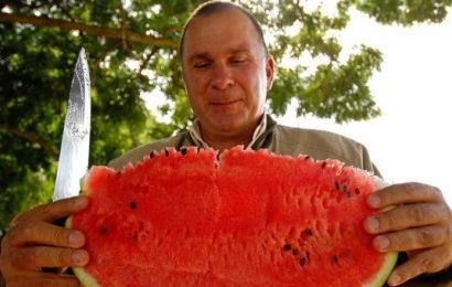 Sveže, sočno, rusko: Zakaj so Rusi nori na lubenice?