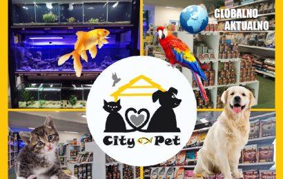 Igra je za razvoj hišnih ljubljenčkov zelo pomembna!